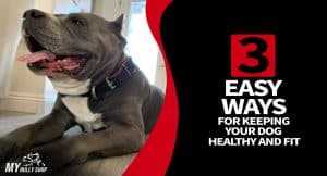 keep your dog healthy and fit