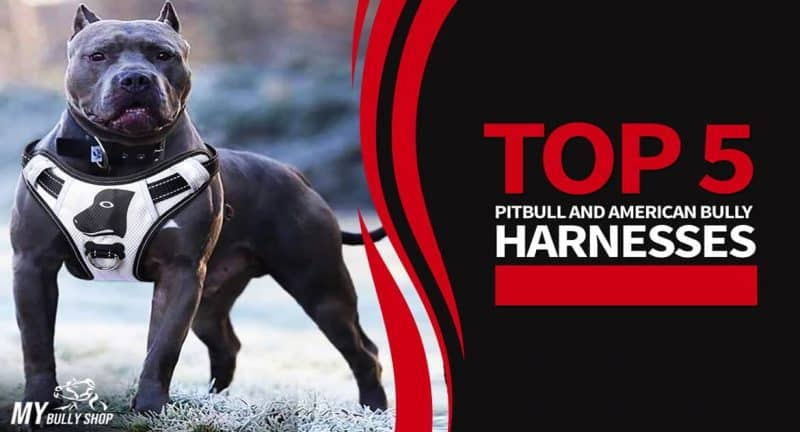 Best American Bully Harnesses
