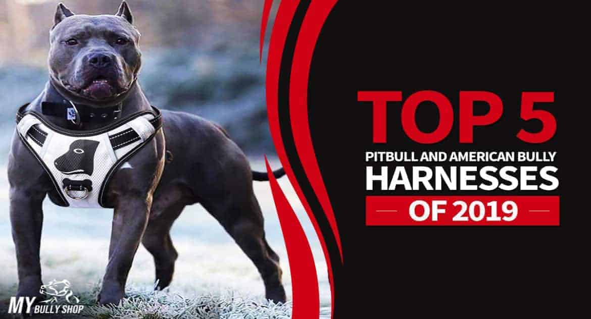 best harnesses for american bully  