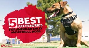 best-bully-accecories