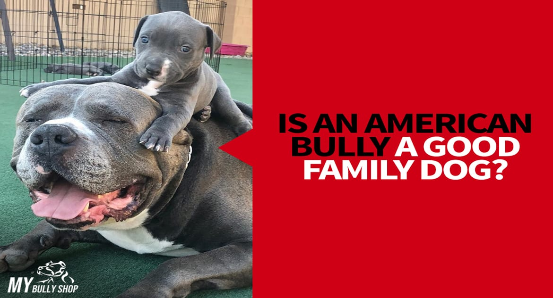 famaly-bully-3 |