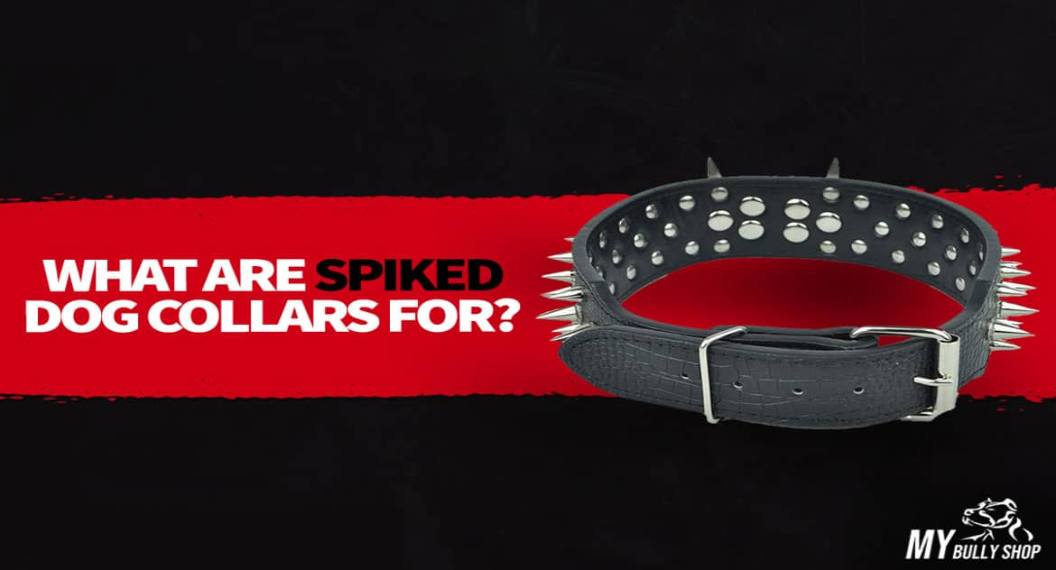 what is spiked dog collar |