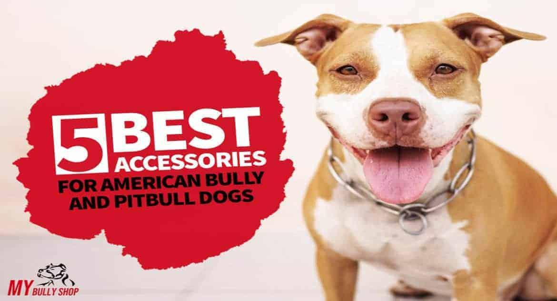 best accessories for Pitbulls  