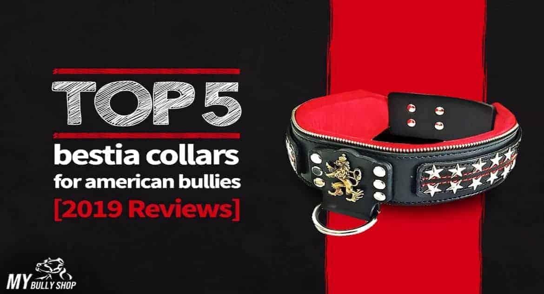 dog collars |