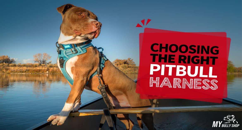 choose-harness |