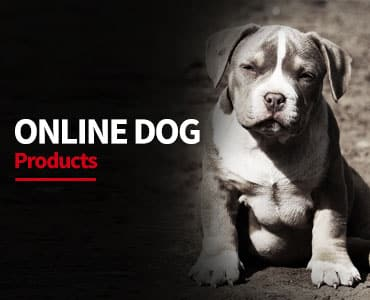online dog shop |