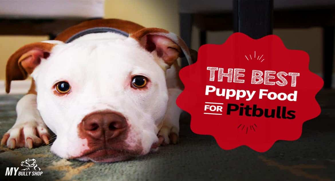 best puppy food for Pitbulls |