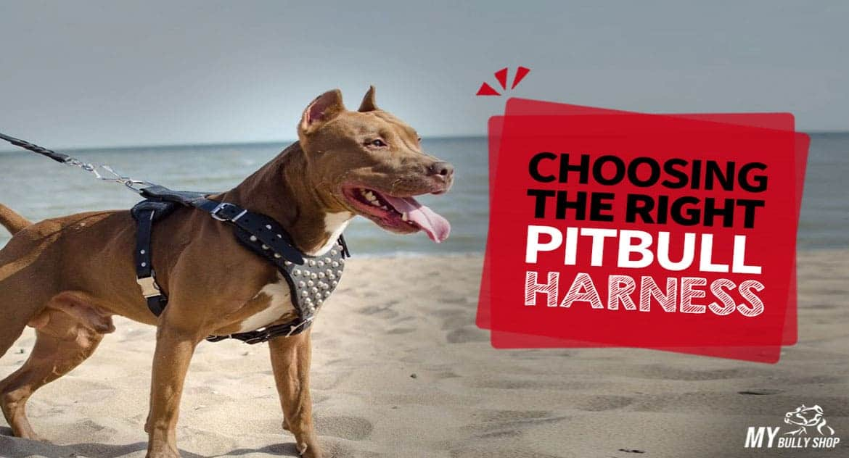 choosing the right pitbull harness |