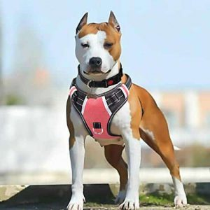 BABYLTRL Big Dog Harness No Pull |