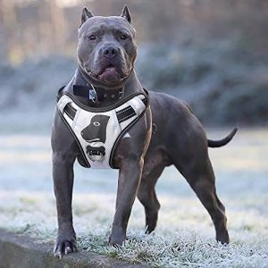 Babyltrl Big Dog Harness |