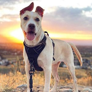 RABBITGOO Dog Harness No Pull |