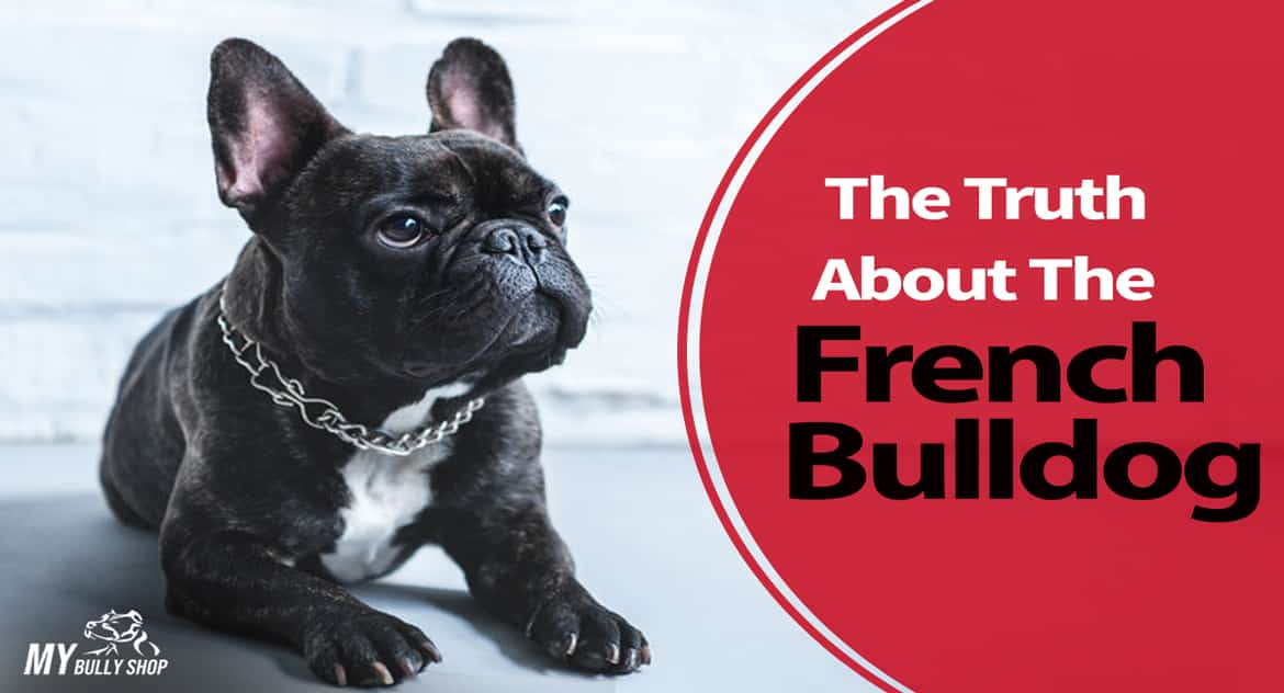 french-bulldog |