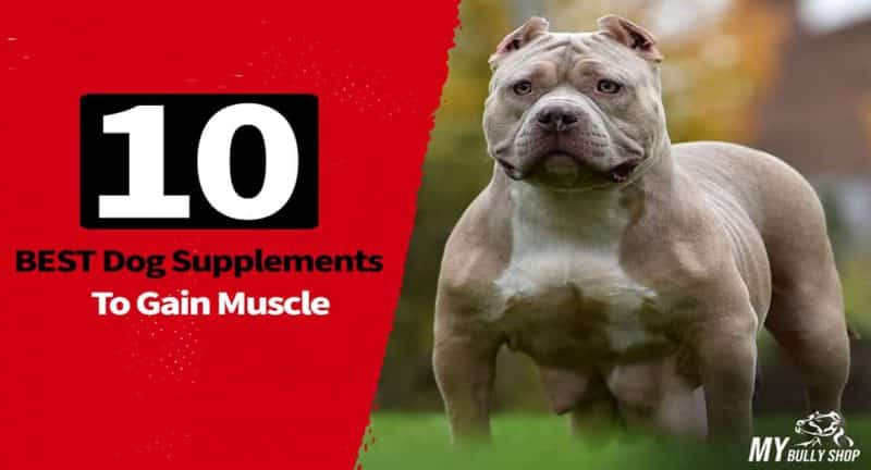 supplements to gain muscle