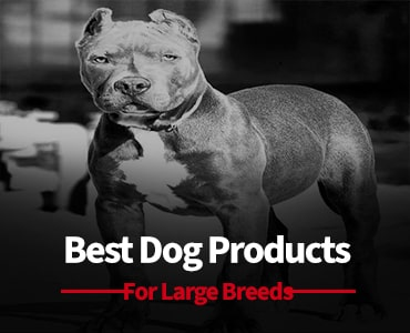 best big dog products