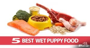 wet-puppy-dog-foods